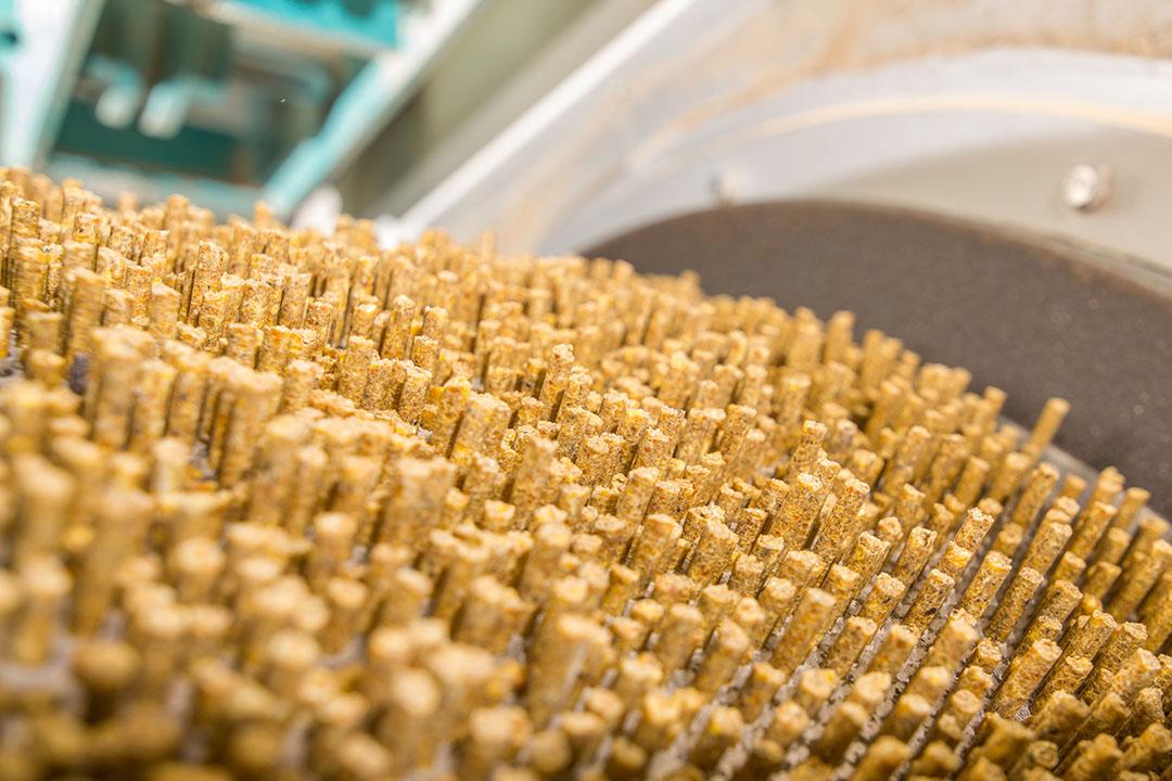 La producción de pellets y la longevidad de la matriz han aumentado gracias a una línea de procesamiento de piensos alternativos. Foto: Shutterstock