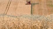 Los comerciantes de granos encuentran que el nivel de precios actual es interesante para comprar. Foto: AFP