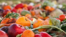 No se garantiza la seguridad de los alimentos cuando se utilizan residuos de alimentos.