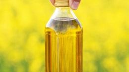 Al añadir el aceite de colza, se demostró que la producción de metano disminuyó en un 7,3% en el ganado alimentado con ensilado de maíz o ensilado de hierba. Foto: Shutterstock