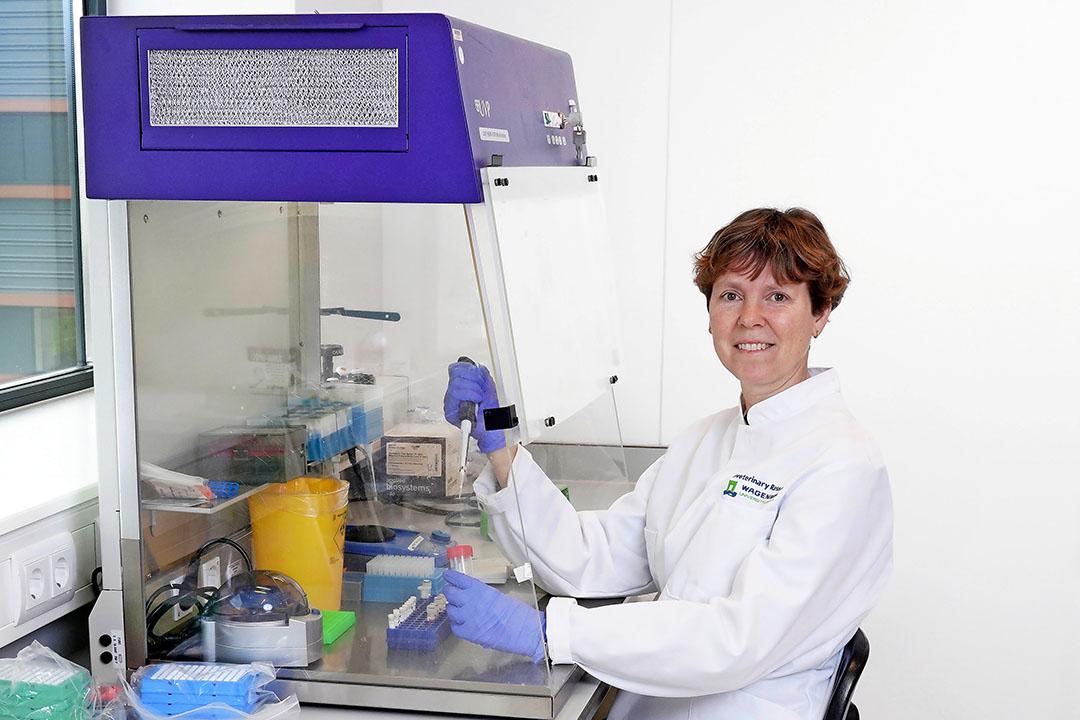 Nancy Beerens está a la espera en caso de que haya que analizar las muestras para la gripe aviar y la peste porcina africana. Foto: Ruud Ploeg