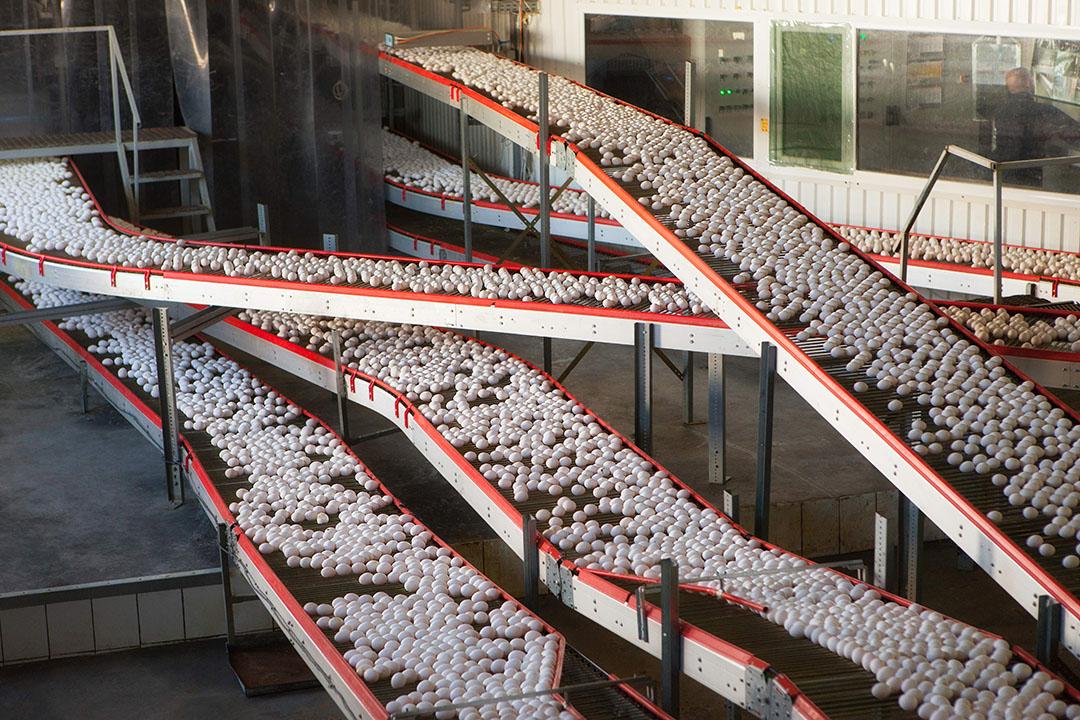 Ucrania es un verdadero campeón en lo que se refiere a la producción de huevos, pero el exceso de oferta ha puesto los niveles de precios bajo presión. Foto: Vadim Uvazhny