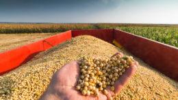 Los precios de la soja mostraron un fuerte aumento la semana pasada. Foto: Canva
