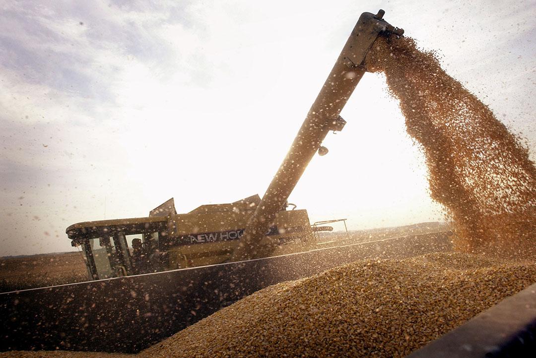El USDA espera una alta demanda de maíz americano del nuevo cultivo. Y los analistas sostienen que el USDA aún no ha tenido en cuenta los daños causados por la tormenta en el maíz de Iowa. Foto: ANP
