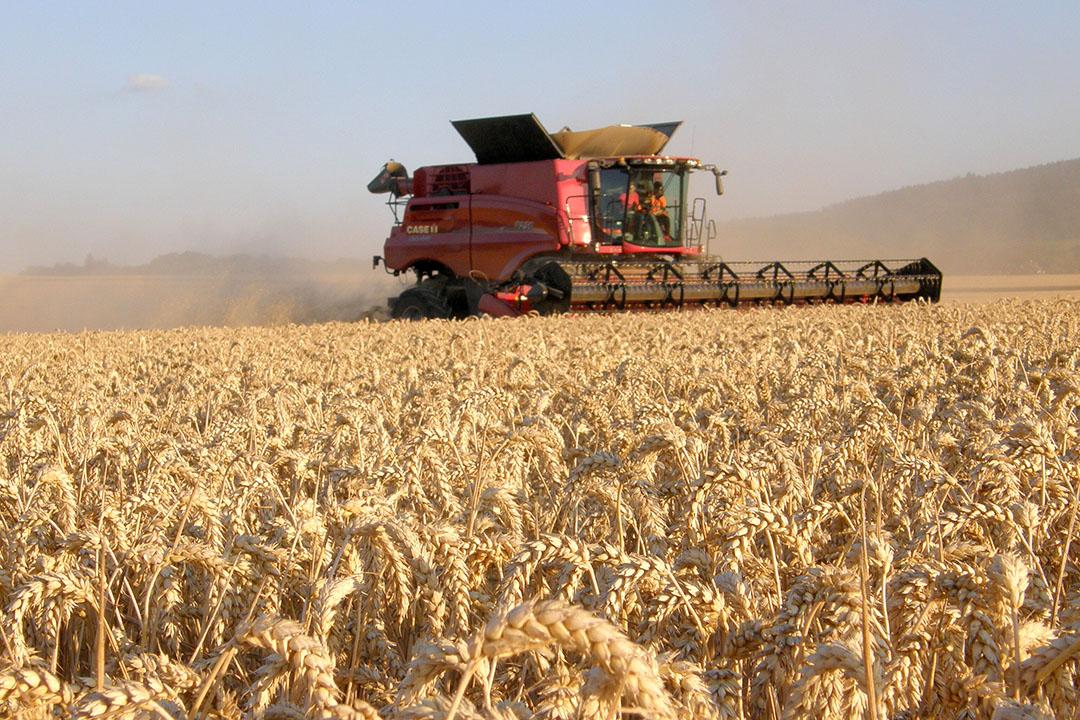 Las condiciones climáticas extremas combinadas con las preocupaciones de Brexit han dejado a los agricultores del Reino Unido preocupados por el futuro. Foto: Chris Mccullough