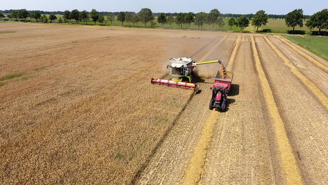Los precios del trigo dependen actualmente del progreso de la cosecha. Según las previsiones de la cosecha, el maíz debería abaratarse y hasta hace poco se esperaba un rendimiento récord. Sin embargo, las fuertes tormentas recientes en el Cinturón de Maíz de EE.UU. ahora ponen en duda esta predicción. Foto: Henk Riswick
