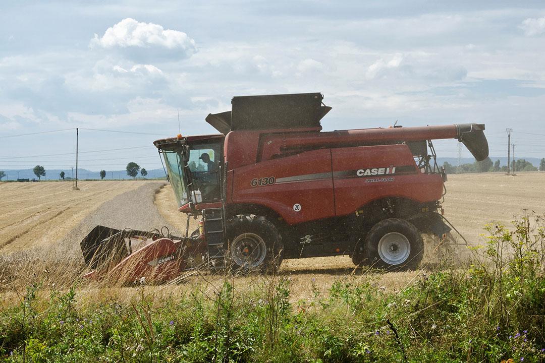 Polonia pretende reducir la dependencia de las fuentes de proteína importadas. Foto: Vladislav Vorotnikov
