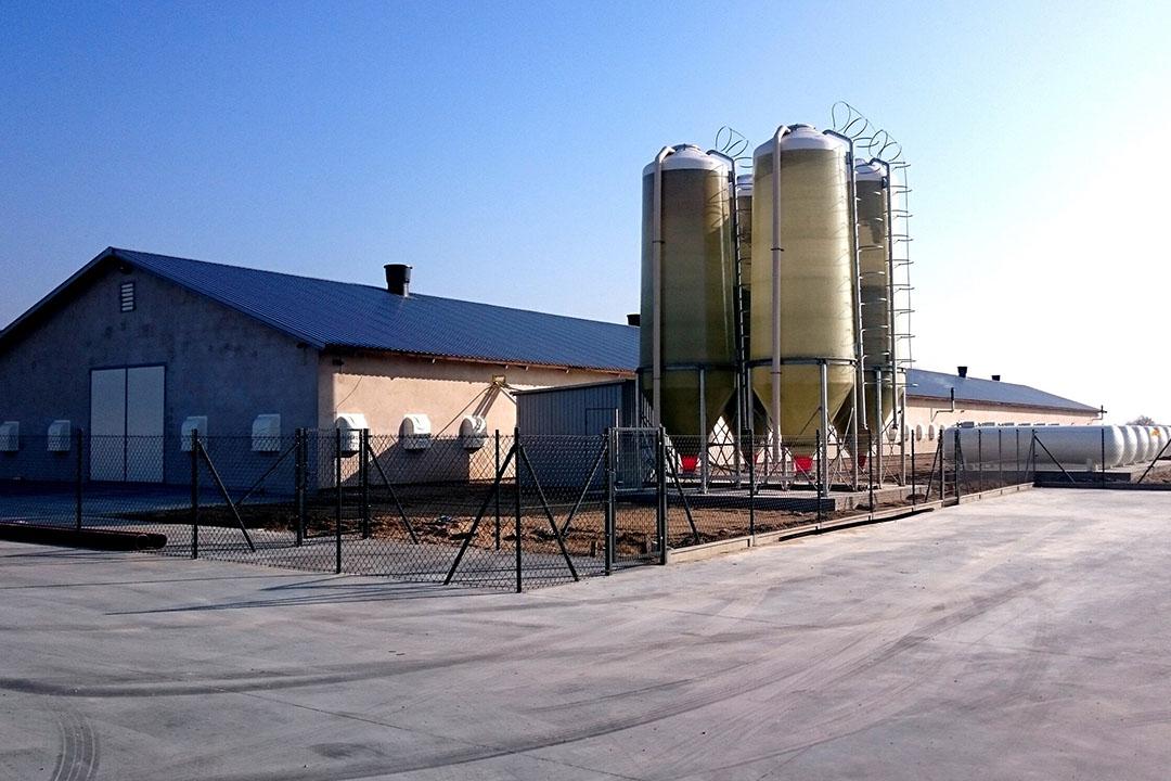 Se prevé que la demanda de piensos en las granjas avícolas de Polonia aumente. Foto: IZBA
