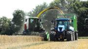 Las perspectivas son buenas para los cultivadores de trigo europeos. El precio del trigo está actualmente bajo presión porque hay mucha cosecha en curso. Foto: Henk Riswick