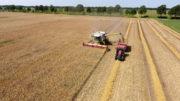 Los precios del trigo dependen actualmente del progreso de la cosecha. Según las previsiones de la cosecha, el maíz debería abaratarse y hasta hace poco se esperaba un rendimiento récord. Sin embargo, las fuertes tormentas recientes en el Cinturón de Maíz de los EE.UU. ahora ponen en duda esta predicción. Foto: Henk Riswick