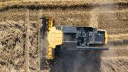 En la época actual de cosecha, el mercado físico de trigo se ve afectado por la primera oferta, que es mayor en todo el mundo que la temporada pasada. Foto: Peter Roek