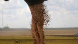 """El cupo se introdujo para el período comprendido entre el 1º de abril y el 30 de junio de 2020 a fin de """"garantizar la seguridad agrícola de los ciudadanos rusos"""", Foto: Maxim Shipenkov"""