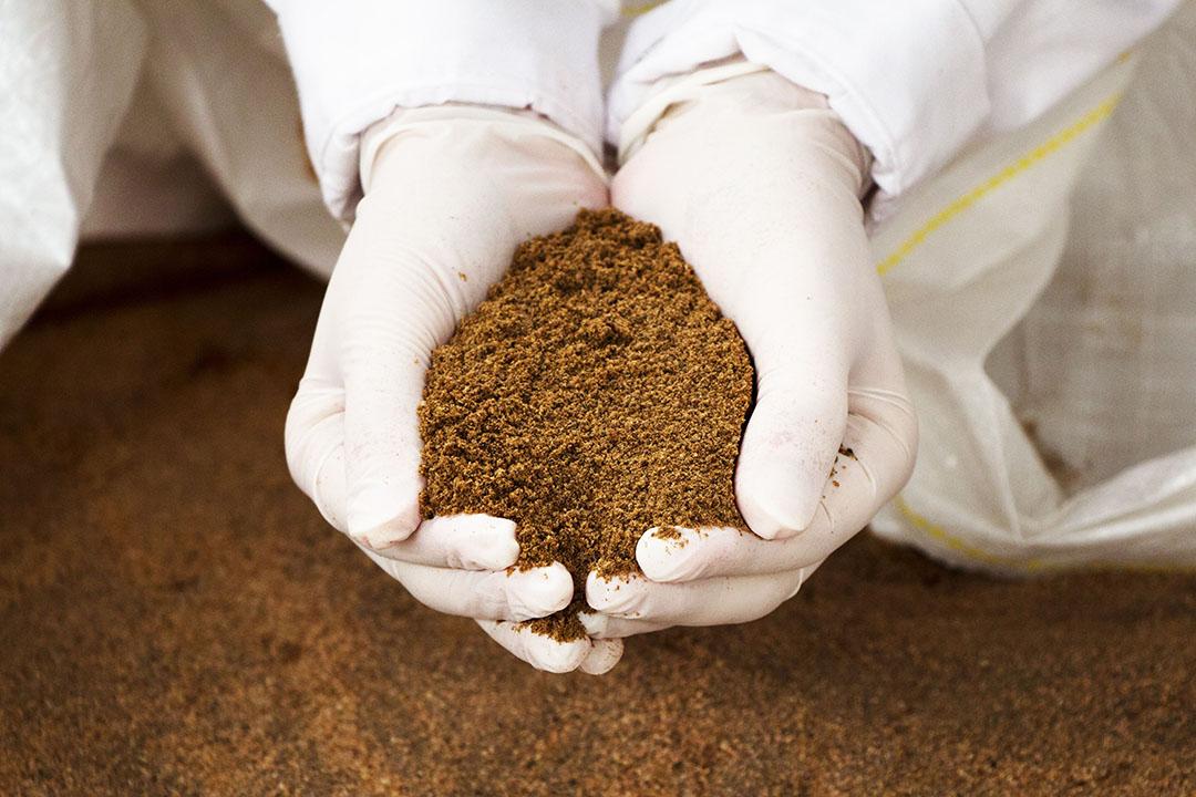 Varios estudios han demostrado que los ingredientes basados en insectos podrían proporcionar una fuente de proteínas tan buena como la harina de pescado y las alternativas a la soja. Foto: Granja Entomo