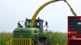 Se prevé un aumento de la producción de maíz para el año 2020/21 en Tailandia debido al incremento de la superficie plantada y a un clima favorable. Foto: Guillermo Gavilla