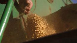 La recuperación de la demanda en el sector de los piensos de China y la mejora de las condiciones económicas están facilitando la venta de la soja. Foto: Hans Prinsen