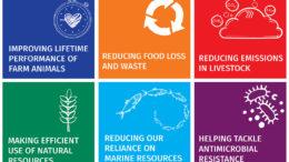 Las 6 plataformas clave de sostenibilidad cubren todo, desde la reducción de la dependencia de los recursos marinos hasta la reducción de los desechos y la pérdida de alimentos. Foto: DSM