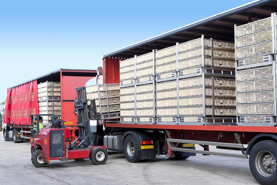 Los módulos de transporte ATLAS SmartStack permiten transportar más aves por viaje, lo que reduce la huella de carbono. Foto: Marel