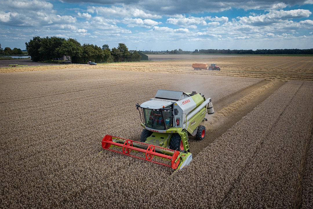 Los precios del trigo y el maíz han aumentado considerablemente en la última semana. Foto: Peter Roek