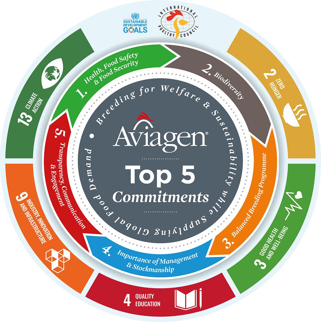 Los cinco compromisos principales de Aviagen les permiten criar para el bienestar y la sostenibilidad, al tiempo que satisfacen la demanda mundial. Foto: Aviagen