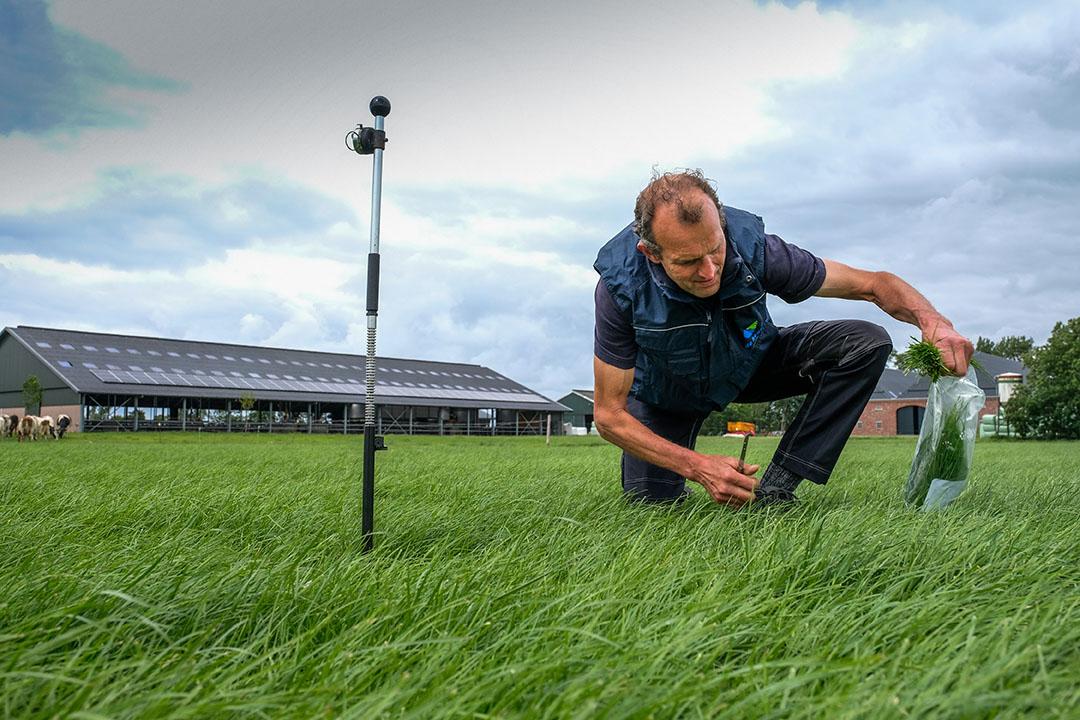 Tomando frecuentemente una muestra de hierba fresca, Wout Huijzer puede asegurarse de que el nivel de proteínas en el pellet se ajuste en base a este análisis. Foto: Jan Willem van Vliet