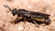 La planta producirá 60.000 toneladas de proteína para alimentación animal al año a partir de la altamente nutritiva Hermetia Illucens, también conocida como la mosca soldado negra. Foto: Shutterstock.
