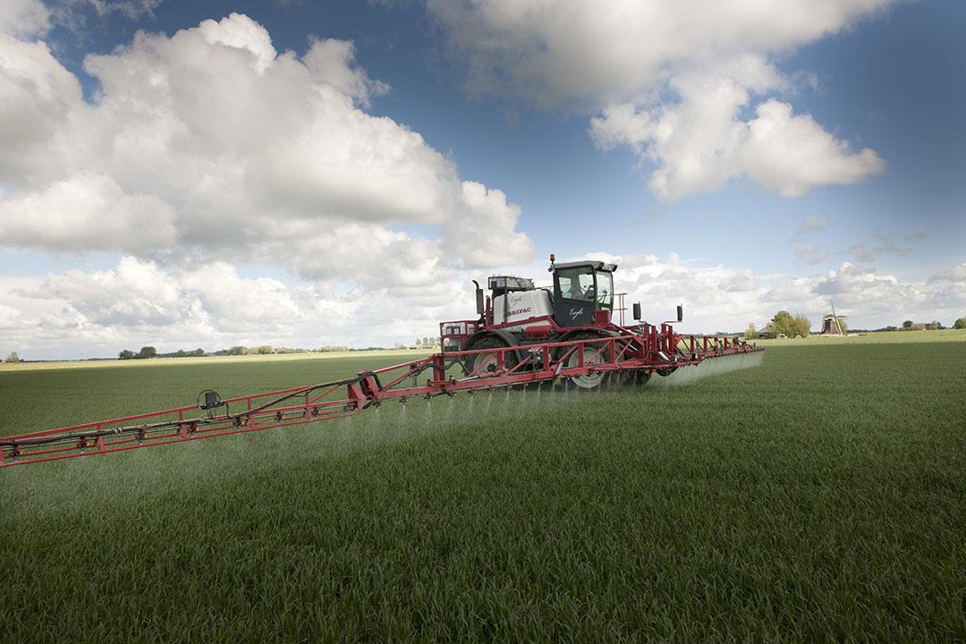 La pulverización de fungicidas en el trigo puede ser sustituida (parcialmente) por la pulverización de endofitos, o por el recubrimiento de las semillas con estos organismos naturales. Foto: Mark Pasveer