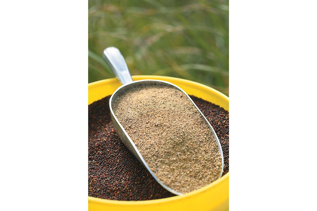 En algunos mercados, el color más oscuro de una dieta con CM en comparación con las dietas compuestas principalmente de maíz y soja puede limitar el uso de CM. Foto: El Consejo Canadiense de la Colza.