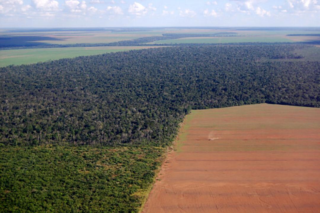 El Brasil es el mayor exportador de soja y de harina para la alimentación animal y para el uso de aceite vegetal. Bajo el actual presidente de Brasil, Jair Bolsonaro, la tala de bosques y sabanas ha aumentado de nuevo. Foto: Canva/Phototreat