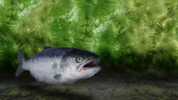 Las investigaciones han demostrado que una combinación de extractos de plantas puede mejorar la inmunidad de los peces y favorecer su rendimiento. Foto: Silvateam