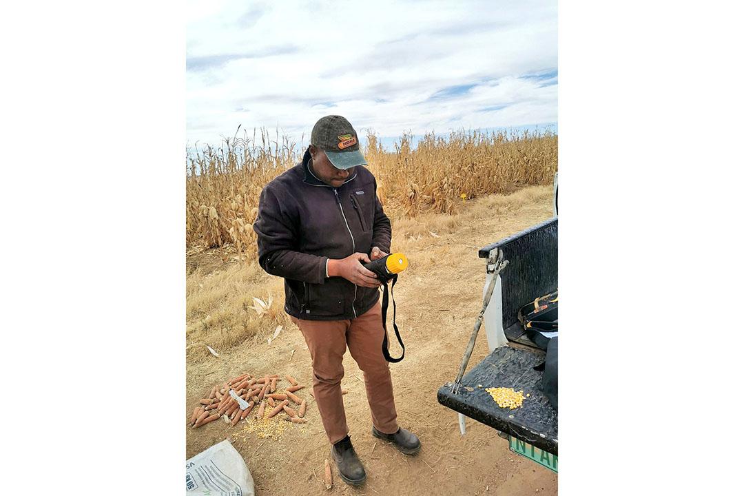Clifford prueba los niveles de humedad del maíz antes de la cosecha. Foto: Chris McCullough