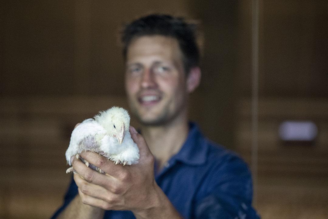 Conocer y monitorear el funcionamiento interno de un pájaro es clave en un enfoque holístico para reducir los antimicrobianos. Foto: Anne van der Woude