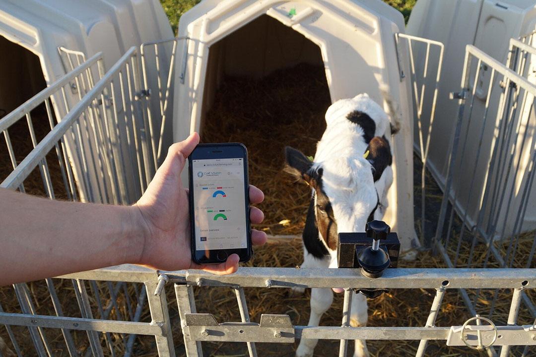 El sistema de sensores envía estos datos a los servidores, donde un algoritmo evalúa los datos de los terneros e identifica los que son susceptibles a las enfermedades. Foto: EuroTier