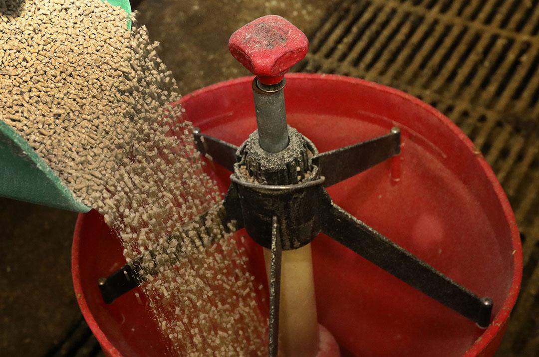 Mantener a los cerdos libres de salmonela requiere un estricto control de entrada en el alimento. Foto: Henk Riswick