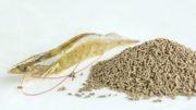 Actualmente, la sustitución de la harina de pescado por proteína de origen vegetal se ha convertido en una tendencia inevitable en el desarrollo de la industria de piensos de P. vannamei. Foto: Shandong Longchang