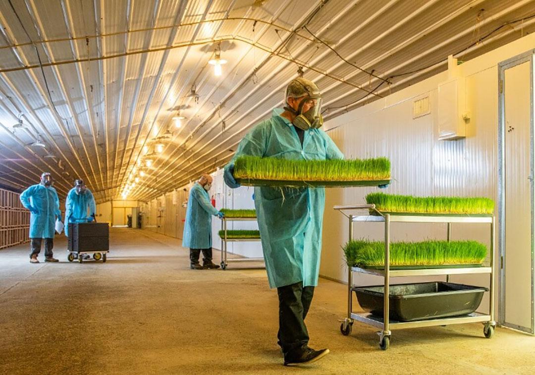 Hargol, la primera granja comercial de saltamontes del mundo, ya cultiva saltamontes para consumo humano. Ahora, están dirigiendo su atención a la alimentación animal, comenzando con la comida para mascotas. Foto: Dror Tamir, Hargol FoodTech