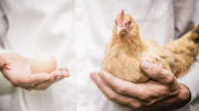 En la producción de aves de corral, la sostenibilidad ambiental y económica están estrechamente entrelazadas. Foto: Alltech