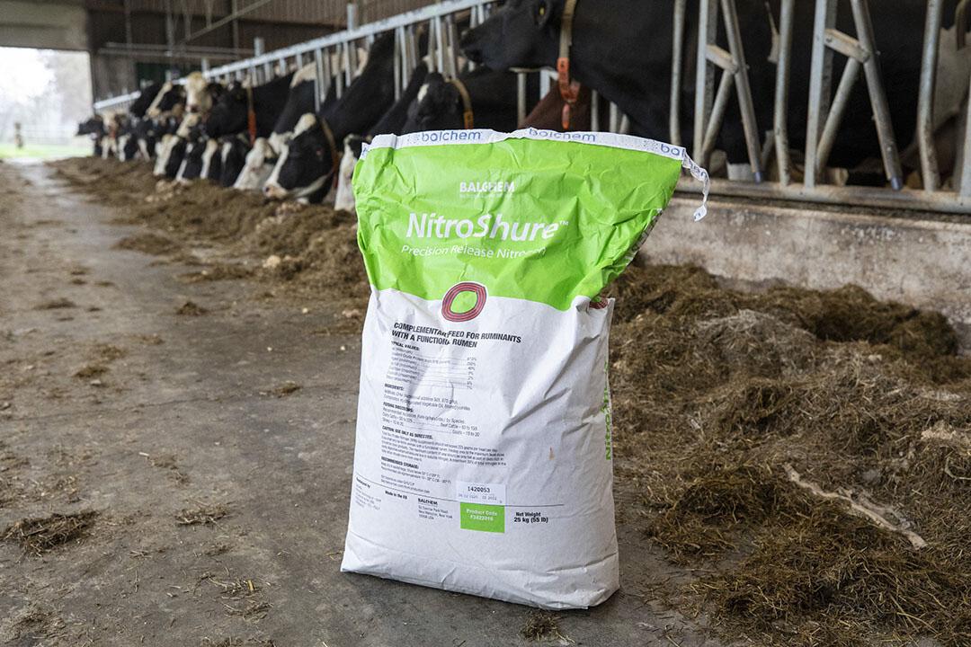 Jan Speerstra espera mucho de la alimentación del ganado basada en los aminoácidos y ácidos grasos específicos que necesitan.
