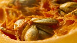 La torta de semillas de calabaza ofrece a los ganaderos una alternativa a la harina de soja y mejora la salud del rebaño. Foto: Free-Photos