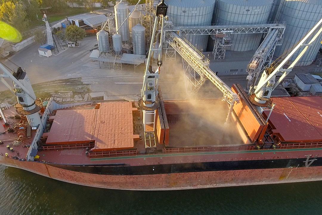 En diciembre de 2020, el Ministerio de Desarrollo Económico de Rusia propuso que el Gobierno impusiera un impuesto a la exportación de trigo desde mediados de febrero hasta finales de junio de 2021. Foto: Plataforma comercial IDK