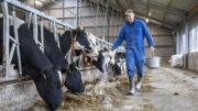 El ganadero Henk van der Veen de Surhuizum utiliza urea de liberación lenta y Protispar de Speerstra Feed Ingredients. Esto es un 30% más barato que la colza adicional. Él nota un ligero aumento de los niveles.