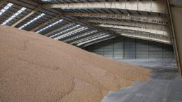 Los problemas climáticos han preocupado a los agricultores e industrias brasileñas. Foto: Peter J.E.Roek