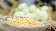 Los precios del maíz han seguido aumentando semana tras semana en vísperas del Año Nuevo chino. Foto: Shutterstock