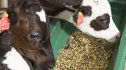 No se puede negar que todo animal joven de producción pasa por un periodo de fragilidad y de inmensos cambios. Foto:Koos Groenwold