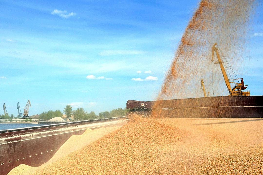 Las restricciones a la exportación pueden recalentar el mercado nacional. Foto: Plataforma comercial IDK