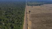 Una carretera en Brasil que discurre entre la Selva Nacional de Tapajos a la izquierda y un campo de soja a la derecha. Foto: ANP
