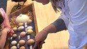 La Dra. Natalie Morgan, nutricionista de aves de corral de la Universidad australiana de Nueva Inglaterra. Foto: Natalie Morgan