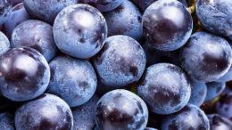 Los polifenoles de los extractos de uva pueden ayudar a combatir el estrés térmico en el ganado. Foto:istock