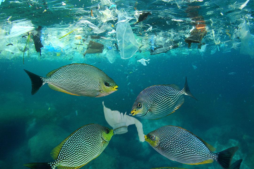 La Universidad de Southampton realizó un estudio para investigar los microplásticos en la harina de pescado. Foto: ANP