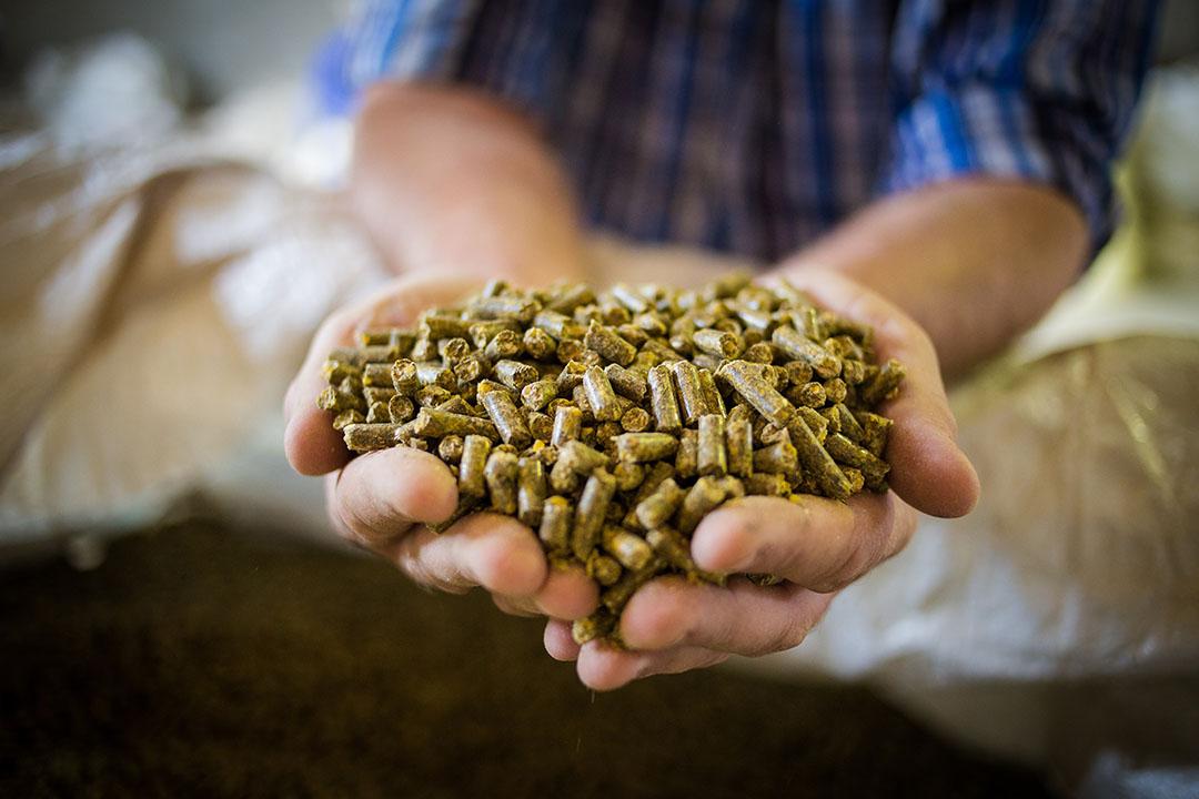 Las grasas y los aceites son importantes fuentes de energía en las fórmulas de los piensos debido a su alta densidad energética. Foto: ORFFA