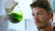 Las microalgas marinas proporcionan una proteína similar a la de los animales, procedente de una planta, con un efecto inmunomodulador demostrado. Foto: inalve